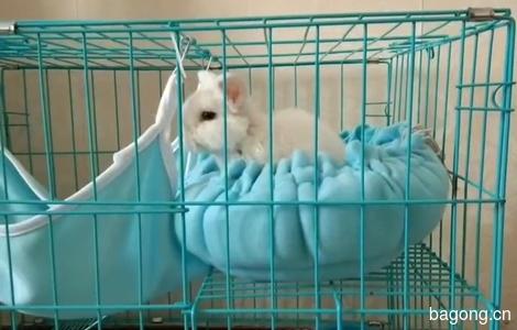 四个月大的垂耳兔,真心喜欢宠物喜欢兔兔的人领养0