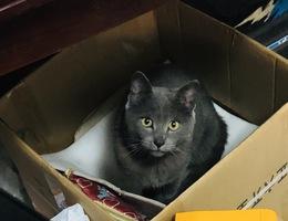 我家爱猫: 成年公猫,品种是中...