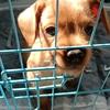 两个多月小狗求领养