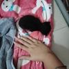 一只小奶猫求收养