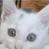 粘人小馋猫找温暖新家