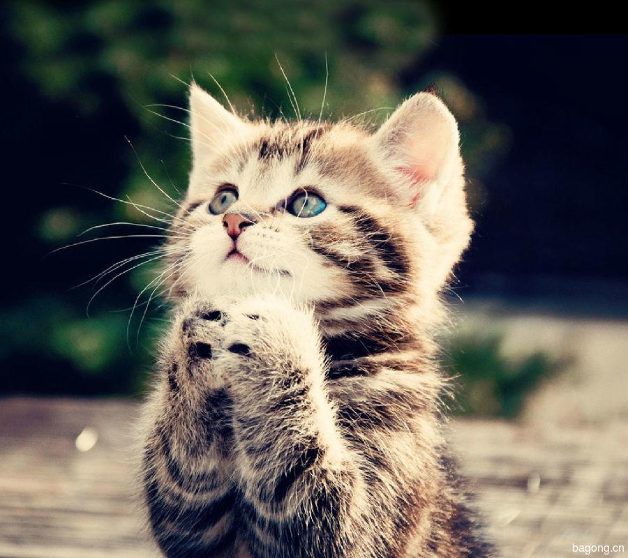 虐猫事件再爆发!谁来拯救这些生命?4