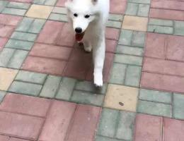 爱犬于11月26日晚23时在银川兴庆...
