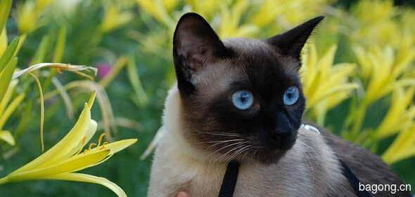 教您快速辨别猫星人品种!!!2