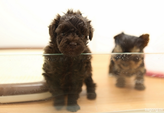 跨国看门道,推敲日本宠物店的经营模式16