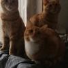 三只可爱小橘子🍊