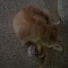 在路边捡到的一只猫