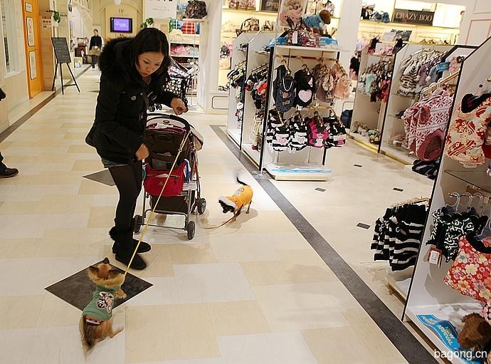 跨国看门道,推敲日本宠物店的经营模式26