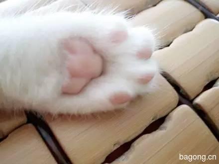 2015可爱猫图集13