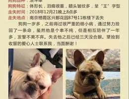 5000元寻狗,重金酬谢, 狗狗品...