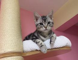 11月2日离家出走,5个月大,公猫...