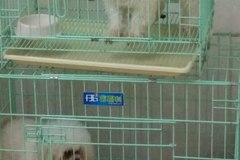 安好宠物诊所5