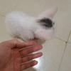 两个半月小猫求好心人抱走