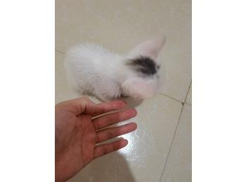 两个半月小猫求好心人...