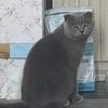 我家猫咪于8月10号凌晨走丢 已经...