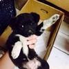 小母,两三个月,小型犬,求领养,海淀上地