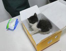 小猫猫刚刚一个月,非常可爱,想...