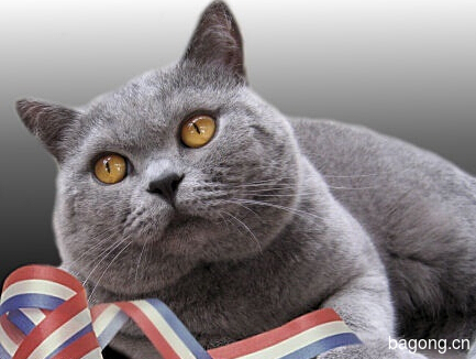 教您快速辨别猫星人品种!!!7