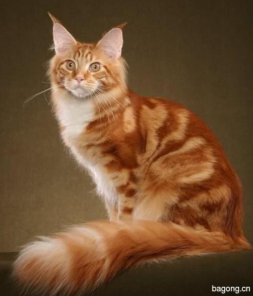 教您快速辨别猫星人品种!!!16