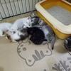 满月的小奶猫 找领养