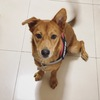 九个月大串串犬寻找好人家 免费领养 送各种狗狗用品