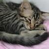 家养猫咪免费送养