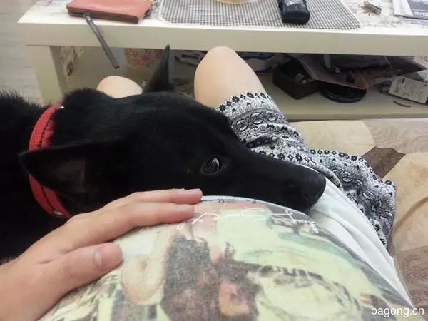【现实版犬八公】女子遭遇4歹徒被流浪狗救下后带回家收养 3