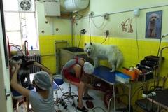 宠艺宠物生活馆1