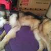 免费赠送幼犬阿拉斯加