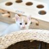 家有小猫找个有爱的新家(5只田园猫)