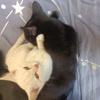 我有两只猫家里原因养不了了求抱走