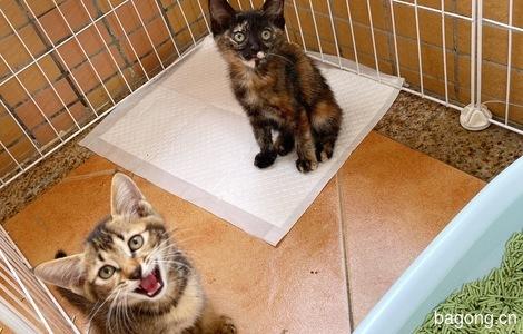 三只小奶猫2