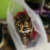 求爱猫人士 好心人领养