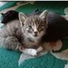共7只猫,两个大的5个满两个月的