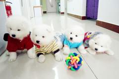 北京宠语花香动物医院环境3