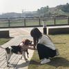 三岁比格因家中不允许养狗,找个好人家