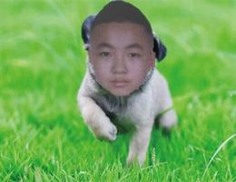 这是谁的狗?