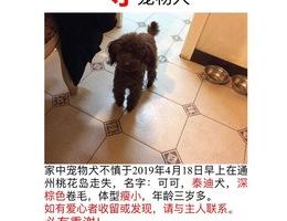 寻宠物犬,家中宠物犬不慎于2019...