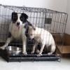 两只狗狗几百,送所有东西