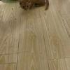 三个月大的小橘猫希望能找个有责任心的铲屎官