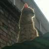 我有一只橘猫和小山猫求抱走,免费的,健康又活力。