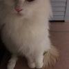 给3个月大的妹妹找个爱猫猫的铲屎官