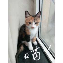可爱小猫咪求抱走
