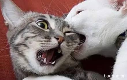 2015可爱猫图集9