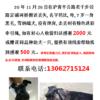 寻狗,20年11月26日在上海沪青平...