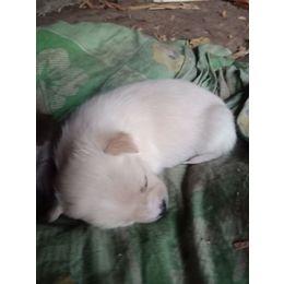 送养小奶狗,身体健康,刚满月,喜欢狗狗的可以领养了。