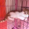 一只小猫咪无偿找爱心人士领养