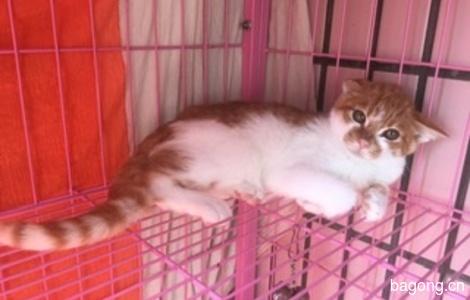 一只小猫咪无偿找爱心人士领养0