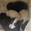 五只小狗等爱心人士领养