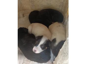 五只小狗等爱心人士领...